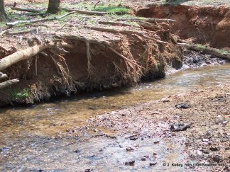 Streambank erosion can be a major contributor of sediment to down stream waters