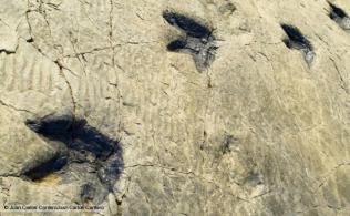 ´Icnita´ dinosaur fossilized footprints Los Cayos palaeontological site Cornago La Rioja Spain